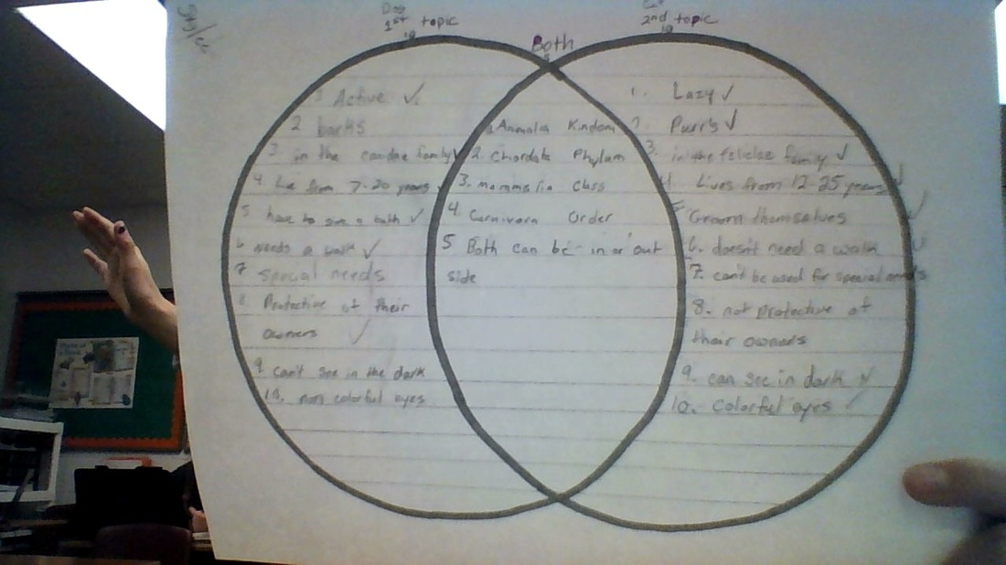 venn diagram dogs vs cats ven diagram dog and cat diagram of cats and dogs #8